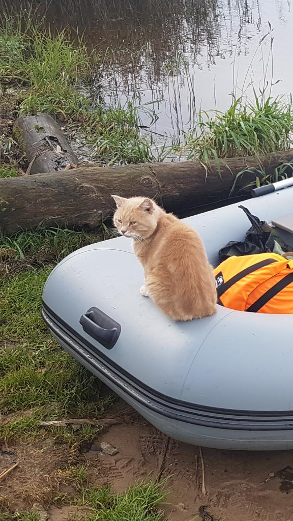 Кот из деревни Чёрное