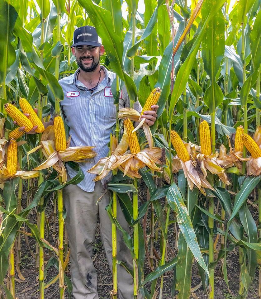 Подержаться за кукурузу