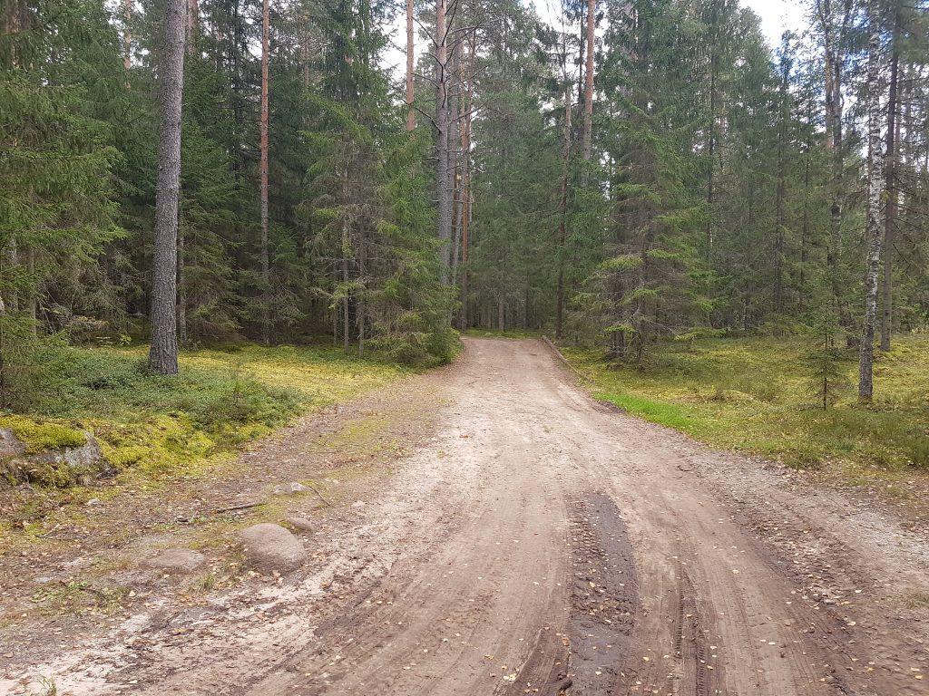 По лесу в Бежаны