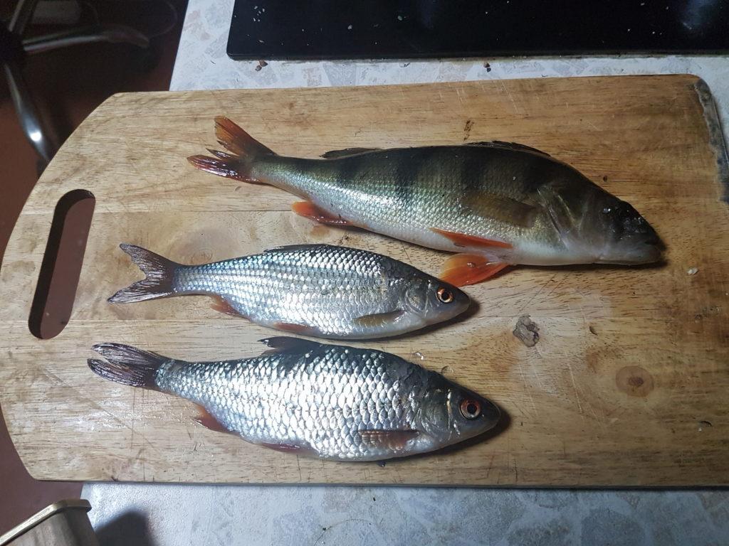 Рыбы из Мги